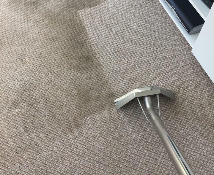 professional carpet cleaning in San Diego